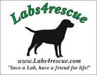 Labs4rescue: Save a Lab, have a friend for life!